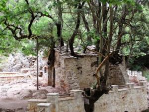 Храм одного дерева (Самарина)